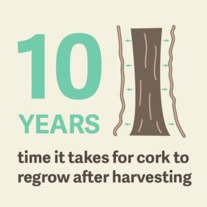 cork-regrows-in-10-years