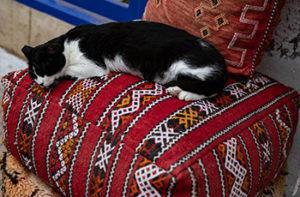 cat-on-ottoman