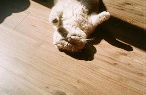 cat-on-unfinished-hardwood-floor