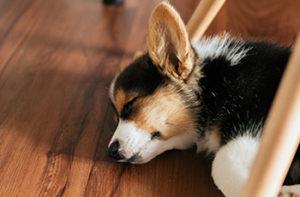 laminate-flooring-is-pet-friendly