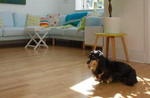 pros-of-laminate-flooring-pet-friendly