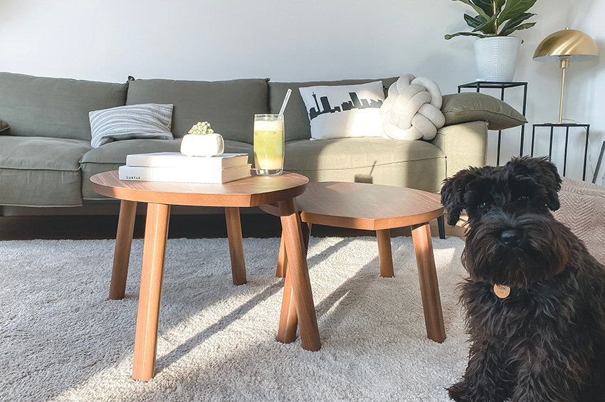 A fluffyy and adorable black dog sits on white carpet in a living room next to a coffee table