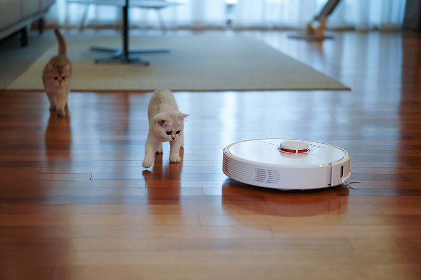 A round robot vacuum cleaning vinyl floors as cats watch